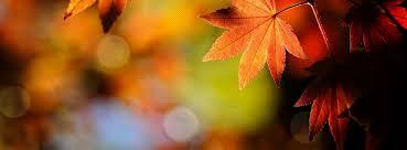 Autumn – Back toLife